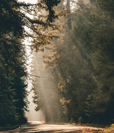 Sunrays shining though smoke during Oregon forest fires summer 2017 Sunset_collection Sunset Oregon Tree Nature Forest Road No People Scenics Tranquility Beauty In Nature Landscape Outdoors