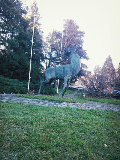 Banovo Brdo Walking Around Belgrade 8 Am