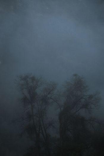 Silhouette Shadows Sequoia National Park HospitalRock Landscape Tree Line EyeEmNewHere