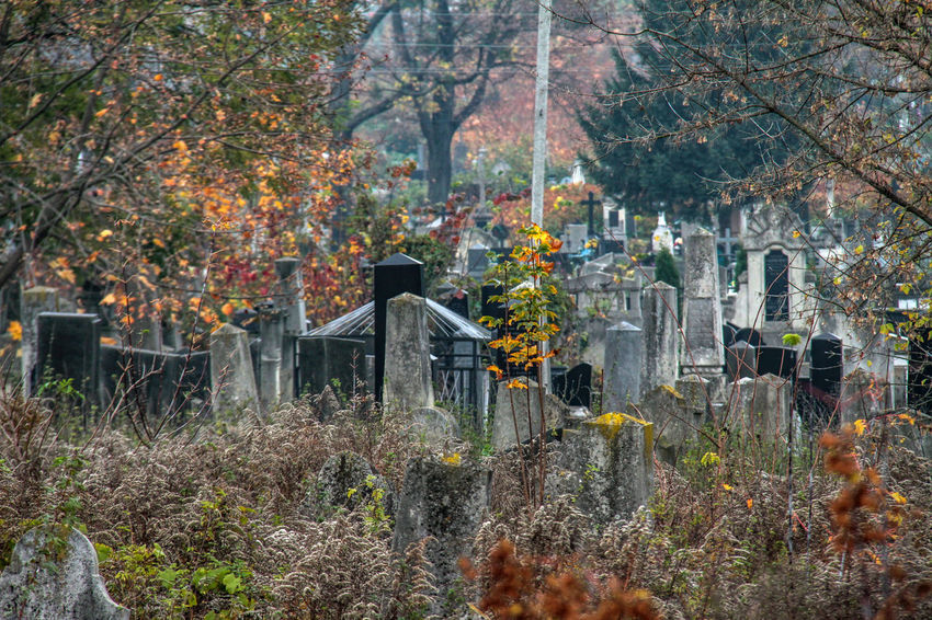 Autumn Autumn Beauty In Nature Cementery Cemetery Change Day Forest Grave Graveyard Jewish Cemetery Jewish Memorial Leaf Memorial Nature No People Outdoors Scenics Tombstone Tree