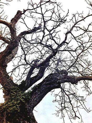 Easter Tree Hugging Rebirth Spirit Of The Tree Tree