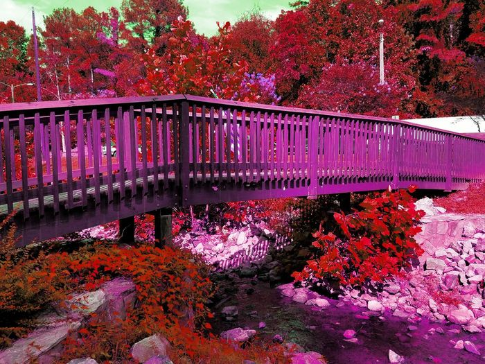 I may have over done the editing but i thought it looked pretty, ill post the original photo as well. Taking Photos Check This Out Hello World Enjoying Life Bridge Wooden Bridge Red Red Flowers Park Naturelovers Eyeem Collection Color Palette Colour Of Life Magical Fantasy Fantasy Edits Fantasy Landscapes Pink Beauty In Nature EyeEm Nature Lover Nature Photography Landscape_Collection Bridge Over Water Bridge Photography Parks And Recreation