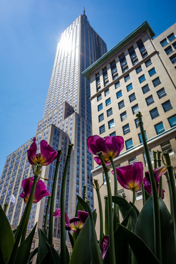Low angle view of pink flowering plant against building