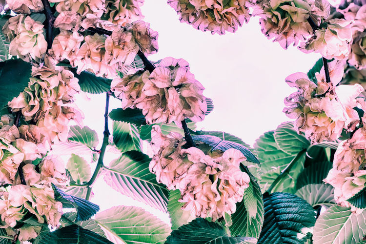 Vintage floral frame, background, natural crown of flowers, branches of leaves Cherry Blossom Bunch Of Flowers Lilac Flower Head Springtime Leaf Outdoors Botany Blossom Flowering Plant Flower Growth Plant Beauty In Nature Close-up Petal No People Plant Part Vintage Frame Crown Branch Pink Spring