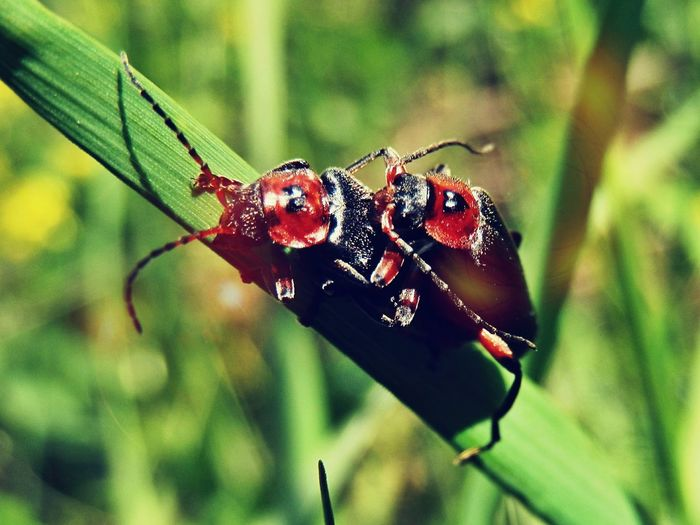 Insect Animals