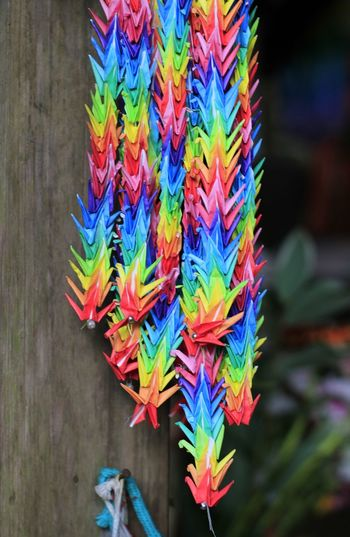 Close-up of colorful decoration hanging on wall