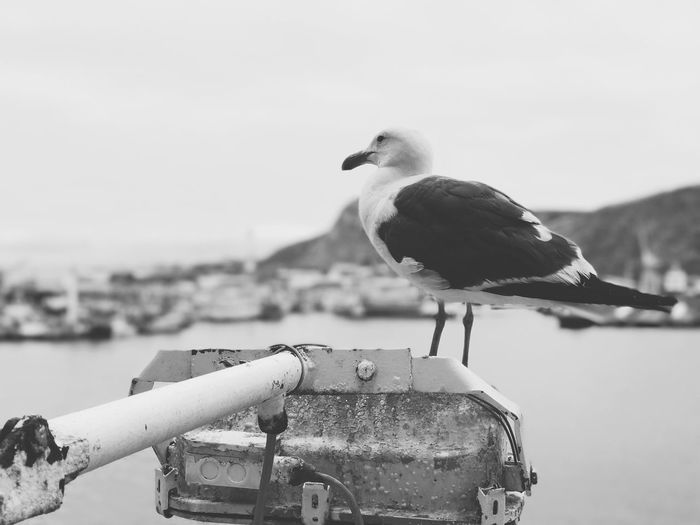 But tomorrow comes and tomorrow goes , and distance between us grows and grows. Seagull Sad Sadness Justlikeme Just Like Me Details Of My Life AMPt - My Perspective Blackandwhite Black And White EyeEm Best Shots - Black + White Goodnight Black And White Life