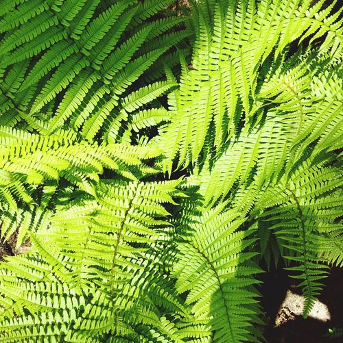 Green Color Leaf Plant Plant Part Growth Day Nature Fern No People Beauty In Nature Full Frame Tree Outdoors Close-up Backgrounds High Angle View Sunlight Freshness Tranquility Leaves