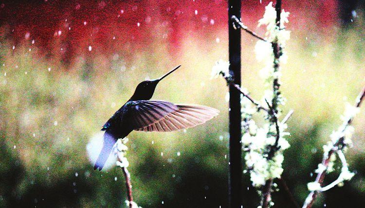 Beautiful Birds Nature Photography Humingbird