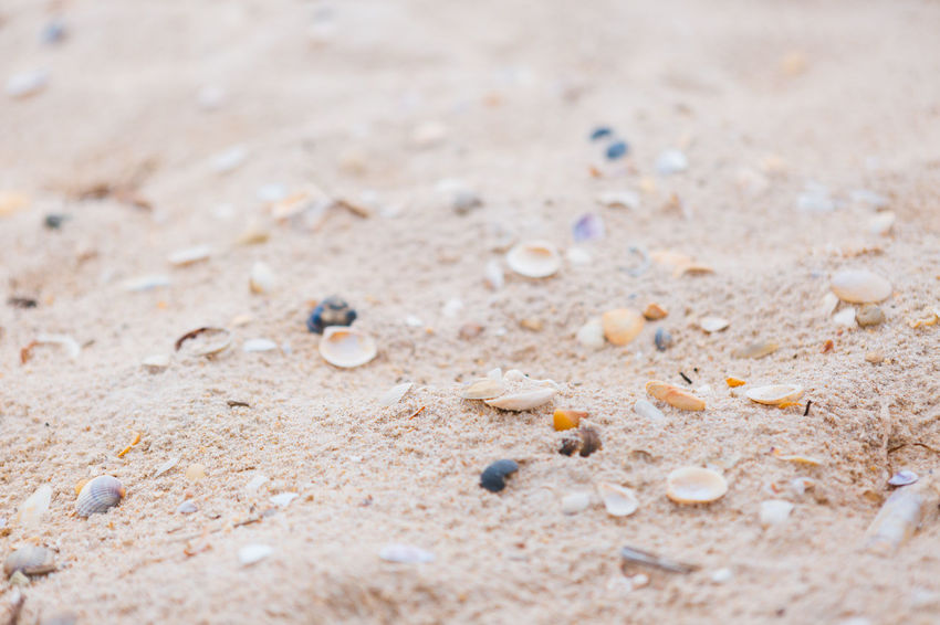 No People Full Frame Sand Selective Focus Close-up Land Copy Space Day Nature Backgrounds Outdoors Food And Drink Beach Bubble Environment Water Food Multi Colored Abundance