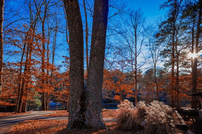 Beautiful Fall Colors on the Lake in Lawrenceville Ga. Autumn Backlit Bare Tree Branch Change Cold Cold Temperature Day Footpath Forest Light Narrow Outdoors Park Park - Man Made Space Season  The Way Forward Tree Tree Trunk Treelined WoodLand