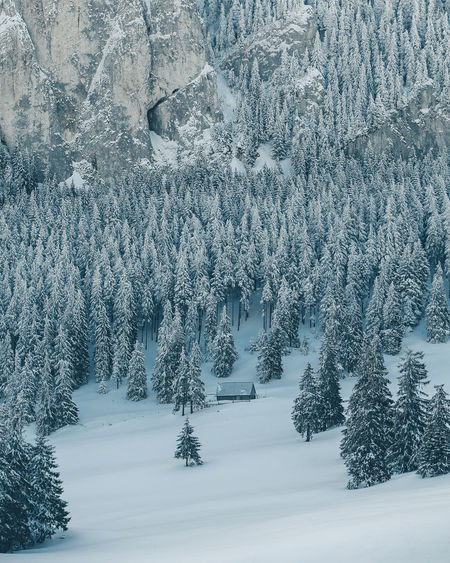 Beauty In Nature Cold Temperature Coniferous Tree Covering Environment Extreme Weather Fir Tree Forest Frozen Land Landscape Nature No People Outdoors Pine Tree Plant Scenics - Nature Snow Snowing Tranquil Scene Tranquility Tree White Color Winter WoodLand