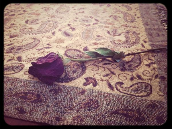 A rose can symbolize a thousand meanings. Photo