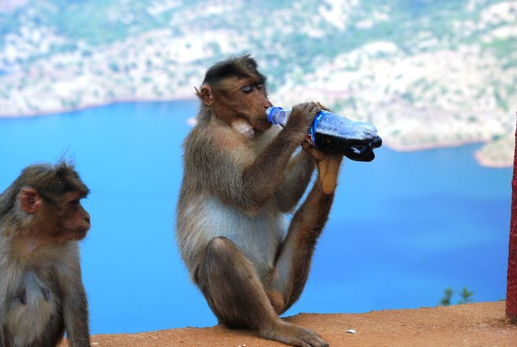 Animal Animal Themes Blue Focus On Foreground Monkey Monkey Drinking Nature No People Market Reviewers' Top Picks