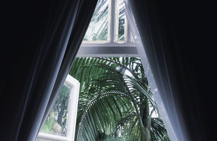 EyeEmNewHere Window Indoors  Curtain Drapes  No People Day Close-up