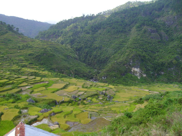 Farm Mountains Rice Fields  Rice Patties Rice Terraces Perspectives On Nature
