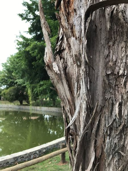 Close-up Tree Nature No People Beauty In Nature Tranquility Tree Trunk Water Day Lake Outdoors
