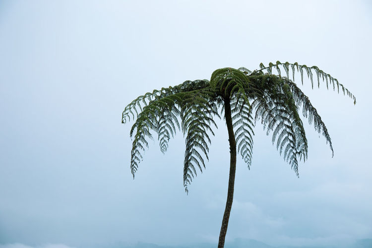Palmerita Beauty In Nature Day Leaf Palm Tree Plant Plant Part Sky Tranquility Tree Tree Trunk Tropical Tree Trunk