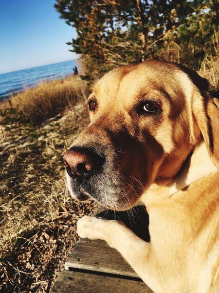 Dogslife Love ♥ Domestic Animals Mammal Nature Beach Outdoors Pet Portraits Pet Portraits