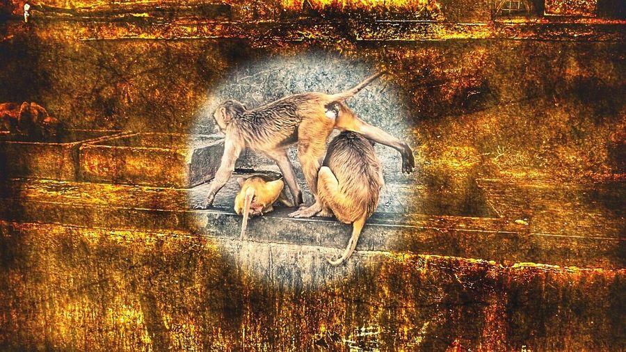 Monkey Temple Monkey Monkey Business Monkey Love Monkey Family Monkeytemple Lotsofmonkeys Doityourself Busy Busyinthestreet Monkey Monkeyness Temple Naughtyanimal PlayingAround 3ofthem Animallove Animalphotography Niceclick