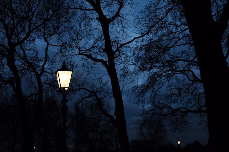 More London London Collection Tree Illuminated Bare Tree Branch Astronomy Sky Street Light Silhouette Stories From The City