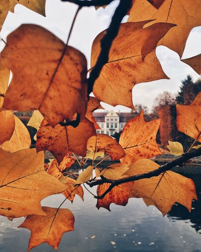 IPSPerspective The Week On EyeEm IPS2015Fall