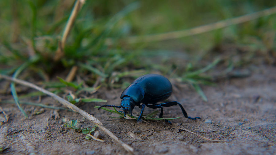 Beetle Close Up Close Up Nature Close-up Cute Exploring Ground Level View Insect Macro Macro Nature