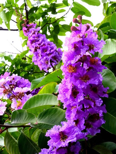 Beauty In Nature Blooming Botany Flower Nature Plant Purple Springtime