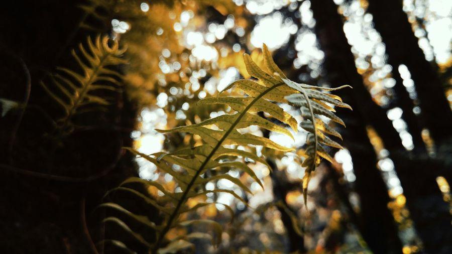 Fern Growing In Forest