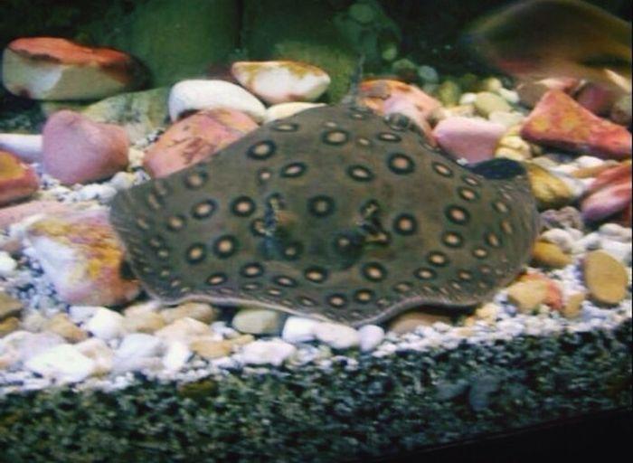 Aquarium Melbourne Manta Australia Animals