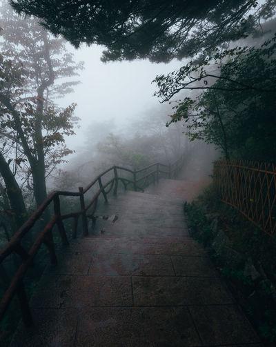Steps amidst trees against sky