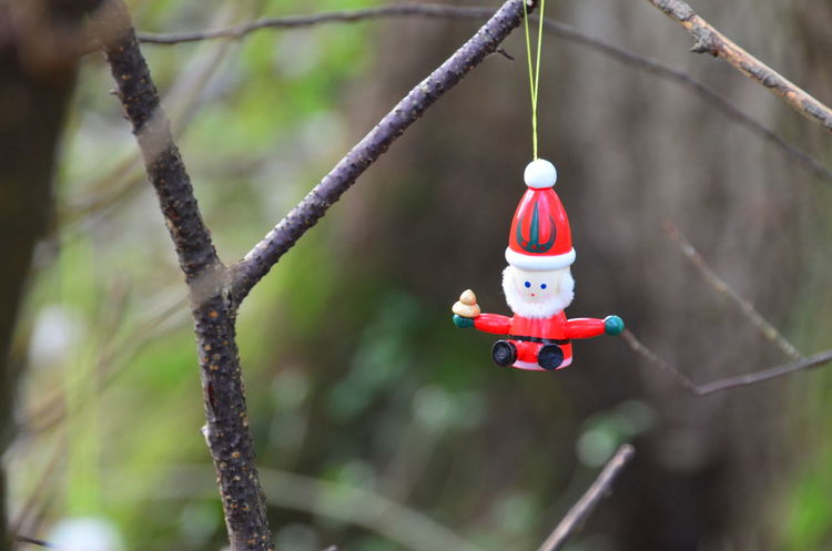 Best EyeEm Shot Christmas Nikon Nikon D5100  Close-up Day first eyeem photo Focus On Foreground Hanging Nature No People Outdoors Red Tree