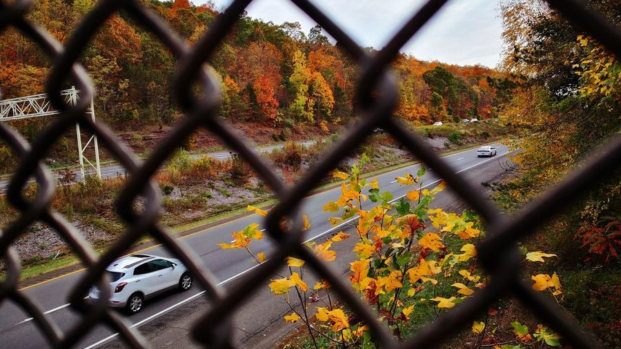 Trees seen through chainlink fence