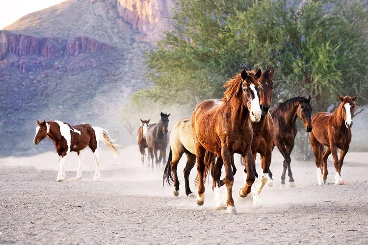Horses Horse Ranch Life Ranch Morning Arizona Ranch Sunrise