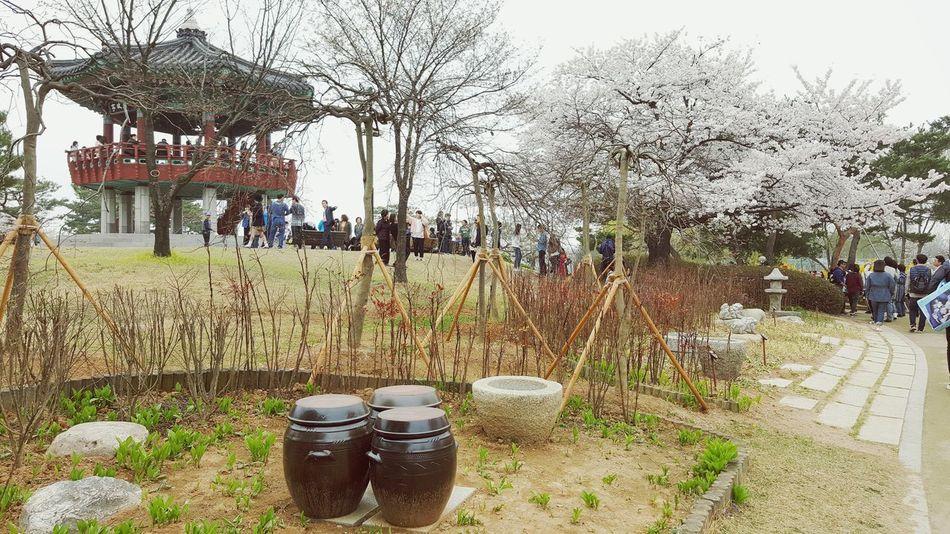 Ilsan Lake Park FlowerLove 🌸 봄소풍