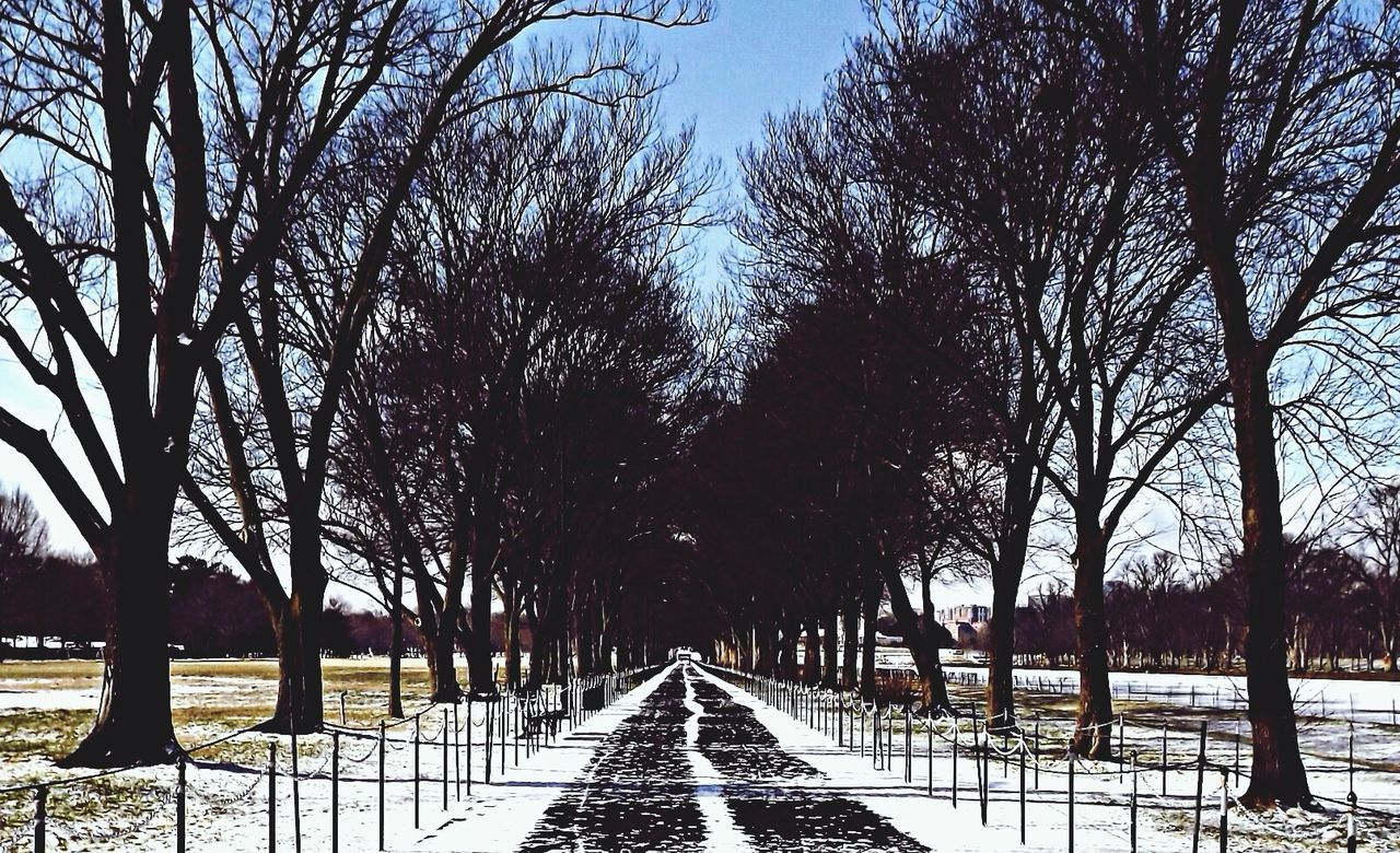 Bare trees at garden during winter