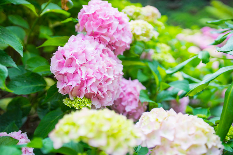 Flower Plant Nature Beauty In Nature Close-up Flower Head No People Outdoors Pink Color