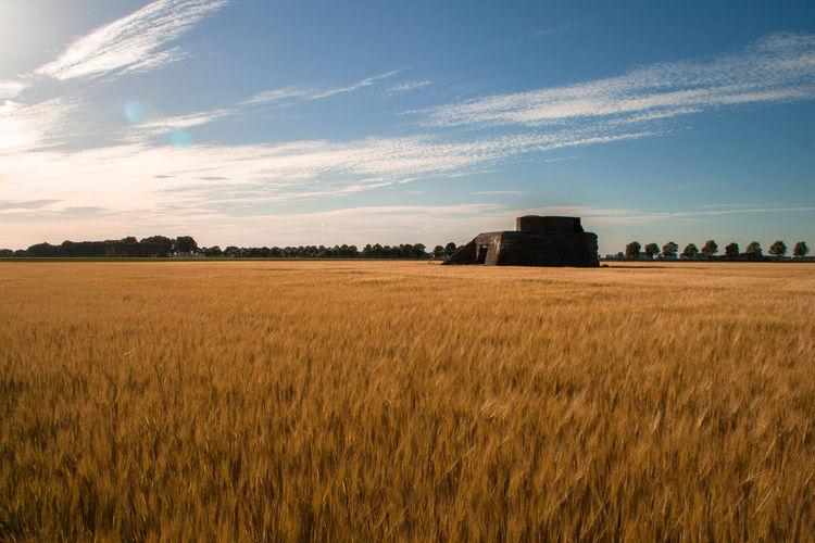Steenbergen [NL] - German bunker in the grainfield Bunker Field Wide Angle Grain Grain Field Grainfield Concrete WWII Ww2 Breathing Space Lost In The Landscape
