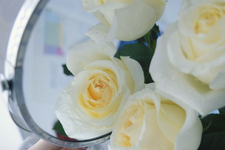 Close-up of roses