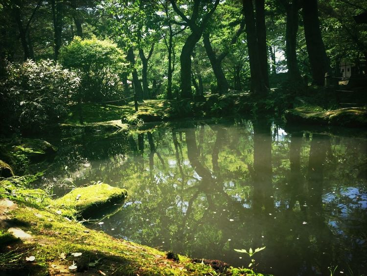 Pond Silent Relaxing Sunny Day