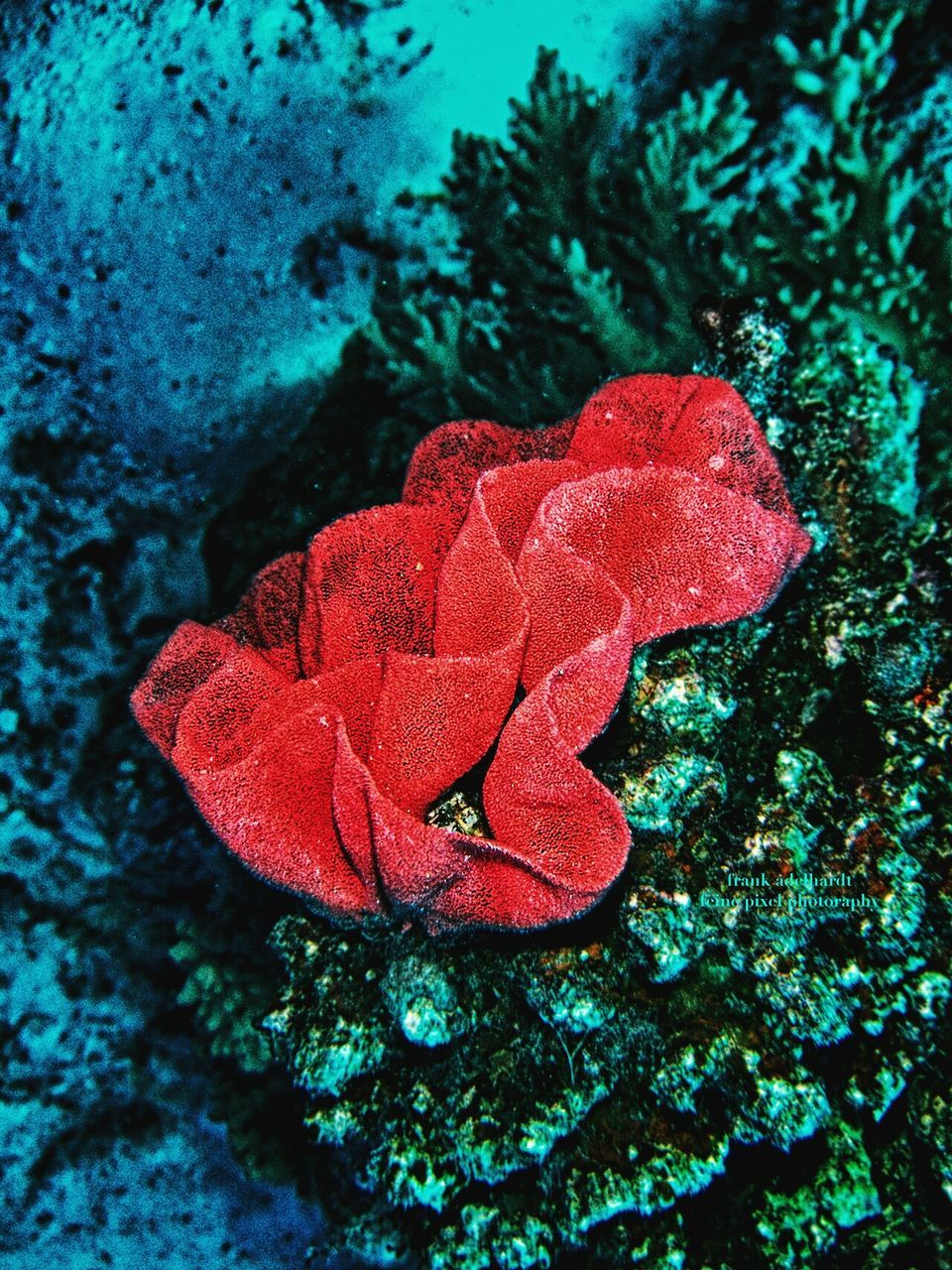 nature, red, beauty in nature, leaf, growth, no people, water, close-up, day, fragility, plant, outdoors, undersea, animal themes, sea life, flower head