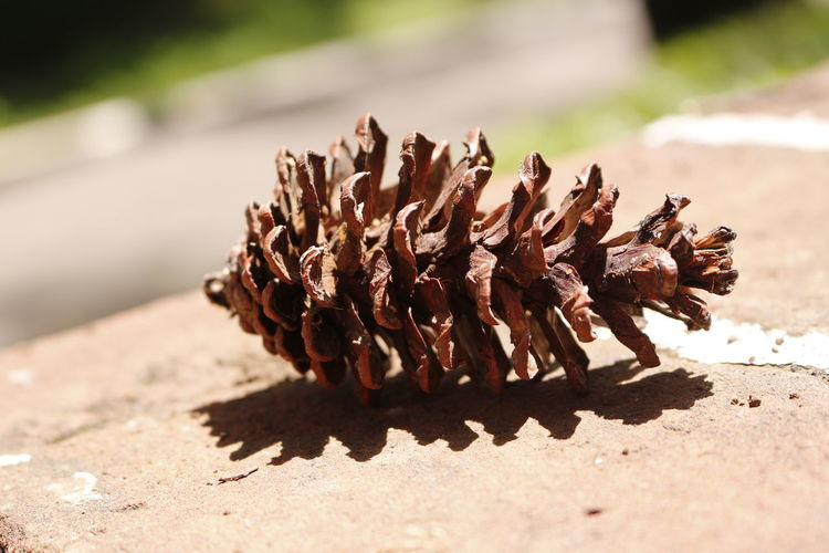 Close-Up Of Pine Cone On Retaining Wall