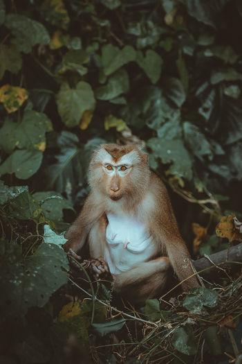Portrait of monkey sitting on tree in forest