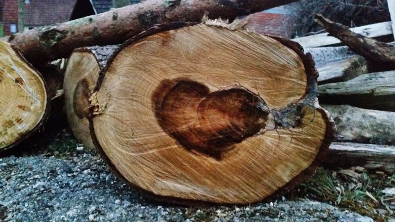 The Heat in the Wood Log Wood - Material Timber Lumber Industry Deforestation No People Close-up Nature Tree Stump Tree Tree Ring