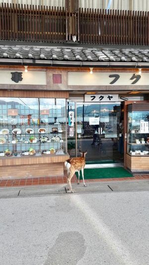 A funny moment to be shared from japan: maybe it is thinking what to buy Thanks To My Daughters Now In Japan Retail  Animal Themes Day Store One Animal Built Structure Building Exterior Full Length Outdoors Pets No People Domestic Animals Architecture City Mammal