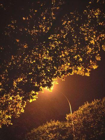 Night Sky No People Nature Night Illuminated Tree Outdoors Sky