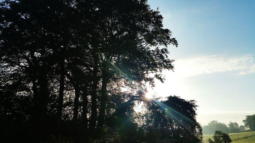 Sky And Trees Tree Silhouette Tree Art Sun And Trees