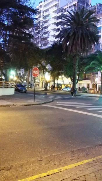 Night City Street People Stop Palms