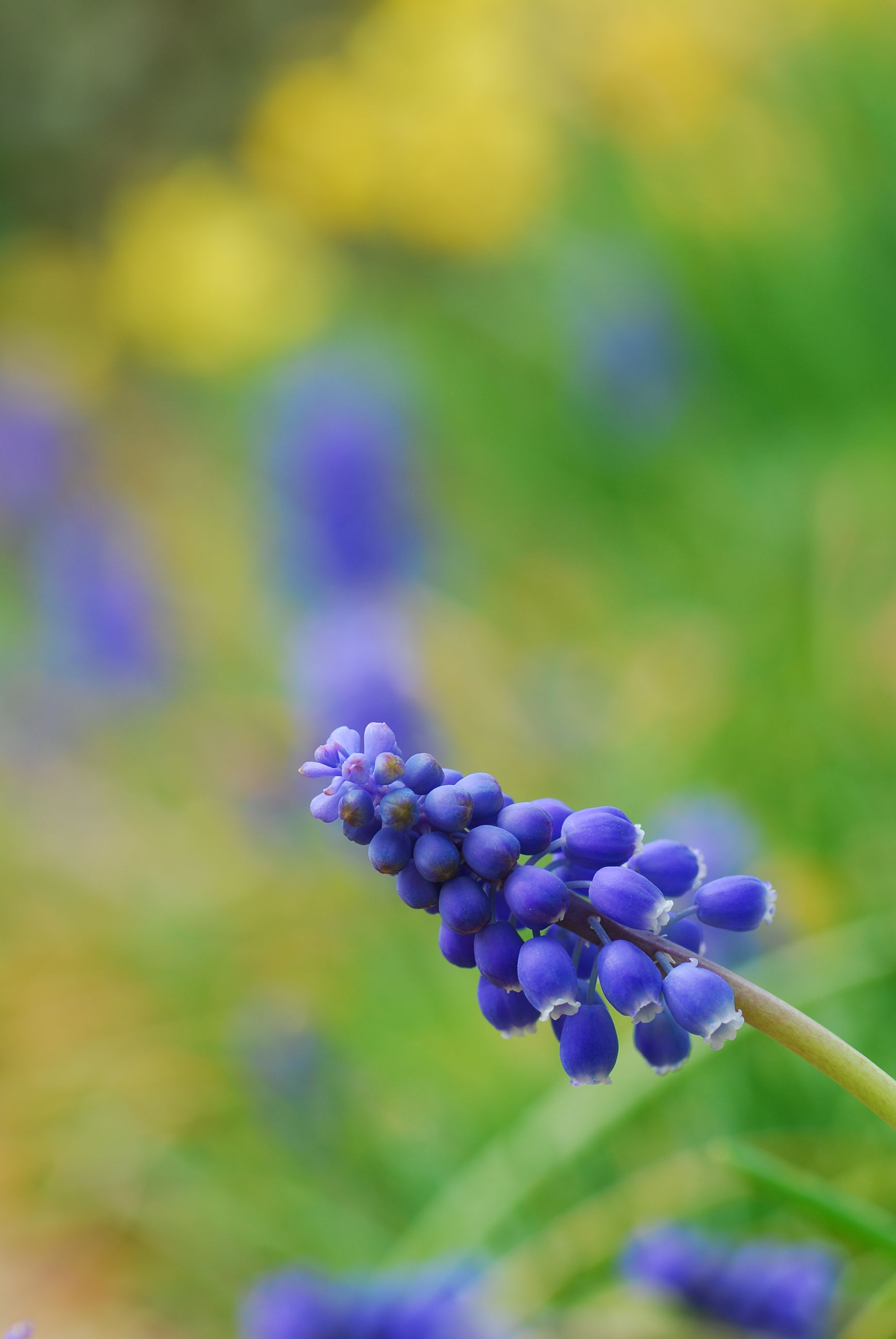 flower, fragility, freshness, purple, beauty in nature, nature, focus on foreground, growth, close-up, flower head, petal, plant, no people, blooming, day, outdoors