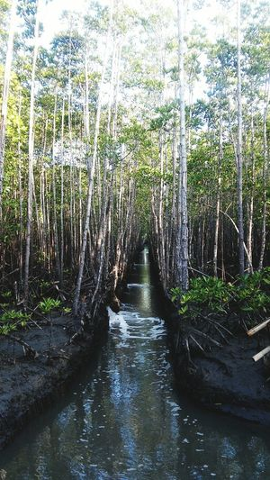 Captivating. I wonder what's in there.Nature Eyeem Philippines Beauty Mangrove Forest Mesmerized